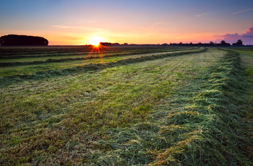 sunrise over green haymaking