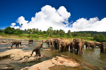 Young elephants playing in the water