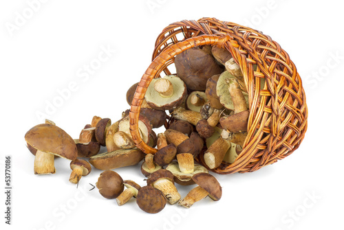 Basket and cepe mushrooms