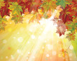 Vector of autumnal leaves on sunny background.