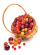 Basket wirh ripe cherry, currants and gooseberries