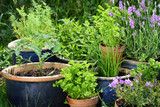 Fototapety Urban gardening - Gemüse und Kräuter in Töpfen