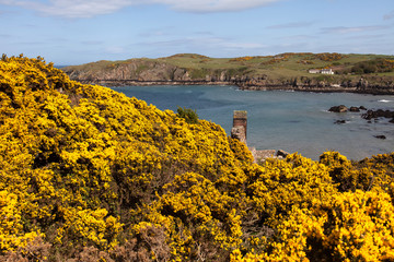 Spring Views around Porth Wen