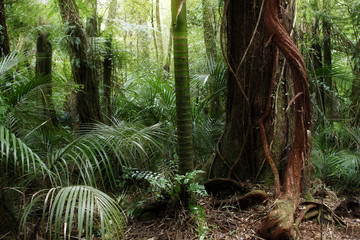 Tropical forest