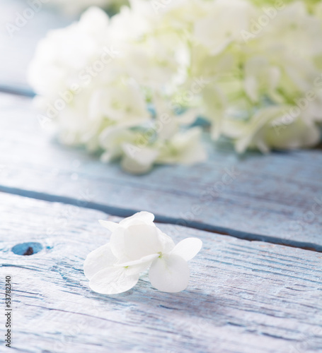 Gentle white flower petal with shallow depth of field.