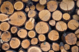 Firewood stacked in the woodpile poster