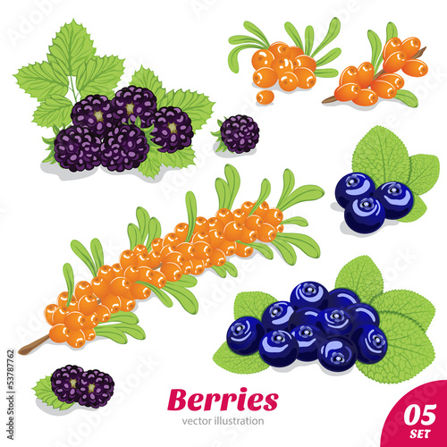 Set of blackberries, blueberries and sea buckthorn