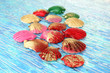 Colorful seashells on bright background