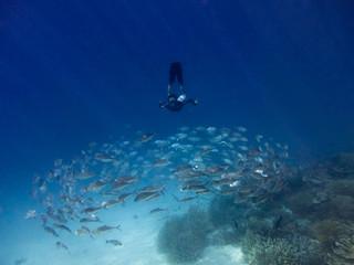 Man and school of fish