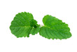 mint, lemon balm