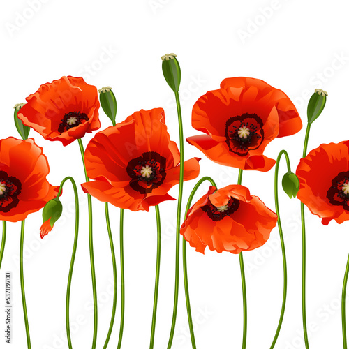 Red poppies in a row. © tassel78