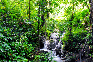 Jungle in Tentena