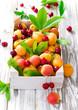 fresh apricots