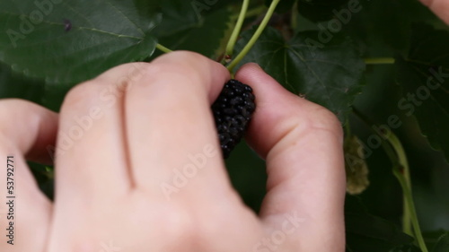 Mulberry in hand.