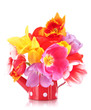 Beautiful tulips in bouquet isolated on white