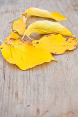 Yellow leaves on a wooden background