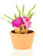 Flowers growing from egg shell with painted face,