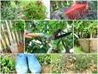 composition , entretien du jardin en automne