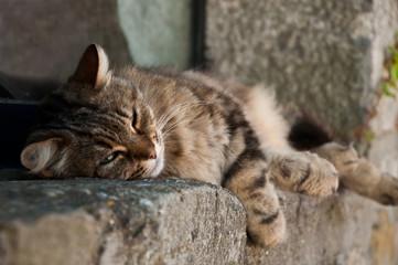 chat faisant la sieste sur le bord d'une fenètre