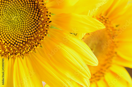 Macro picture of sunflowers