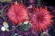 Red Sea Urchins - 53803749