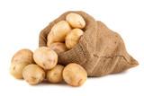 Fototapety Ripe potato in burlap sack