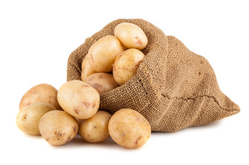 Ripe potato in burlap sack