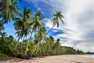 Beautiful beach with tropical palm