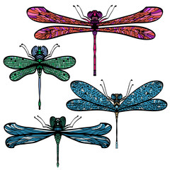 Set of four hand drawn colorful dragonflies