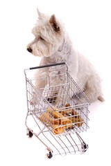 Hund sitzend am Einkaufwagen