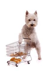 weißer Hund beim Einkaufen