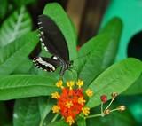 Schmetterling saugt an Blüte
