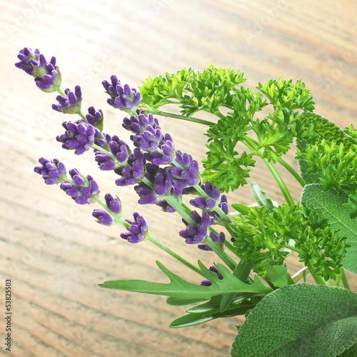 Salbei, Rucola, Lavendel, Petersilie