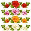 Vector rose horizontal vignette isolated on background