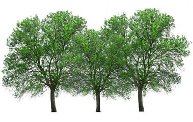 grupo de arboles con hoja verde aislados sobre blanco