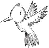 Humming Bird Sketch Doodle Vector Illustration Art