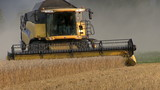 Combine harvesting wheat + Close up