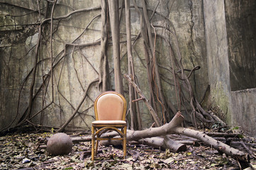 The roots, the old chair and the ruined wall