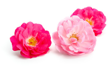 Drei Rosenblüten