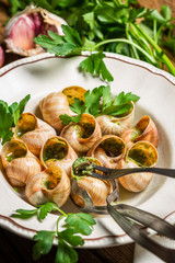 Snails baked in garlic butter served on a plate
