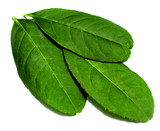 leaves of lemon