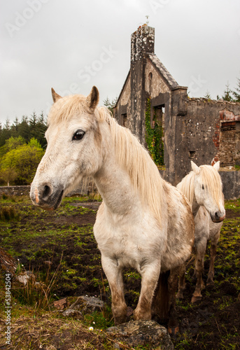 rural horses in Ireland