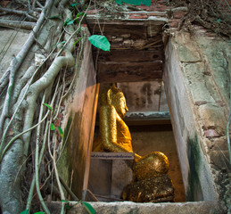 Ancient Buddhist church surrounded by tree roots in Thailand