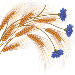 flowers and ears of wheat
