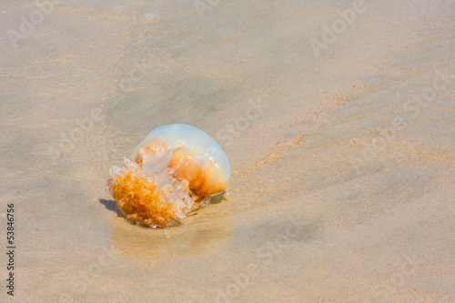 Jellyfish On The Beach