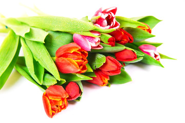 Tulips bouquet isolated on white