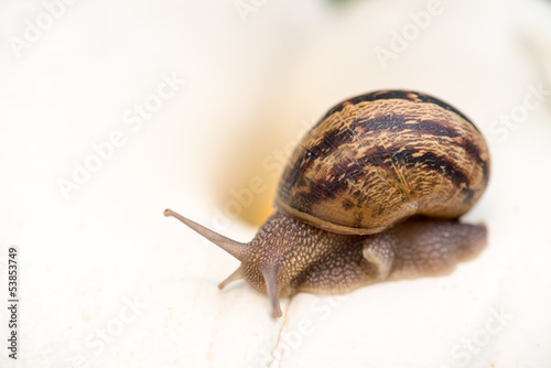 Snail on a White Calla, close-up