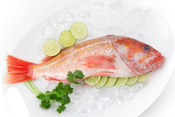 Raw Wild Rockfish