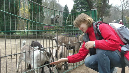 Young woman feeding baby goats, slow motion