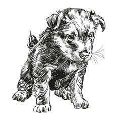 puppy dog hand drawn vector llustration